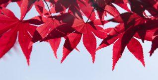 leaves-1193378_1280