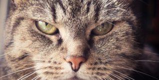 cat-1937001_1920