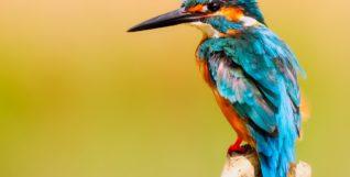 wild bird uk
