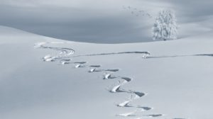 footsteps snow winter